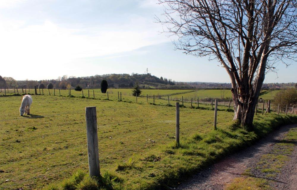 Fields around Burcot